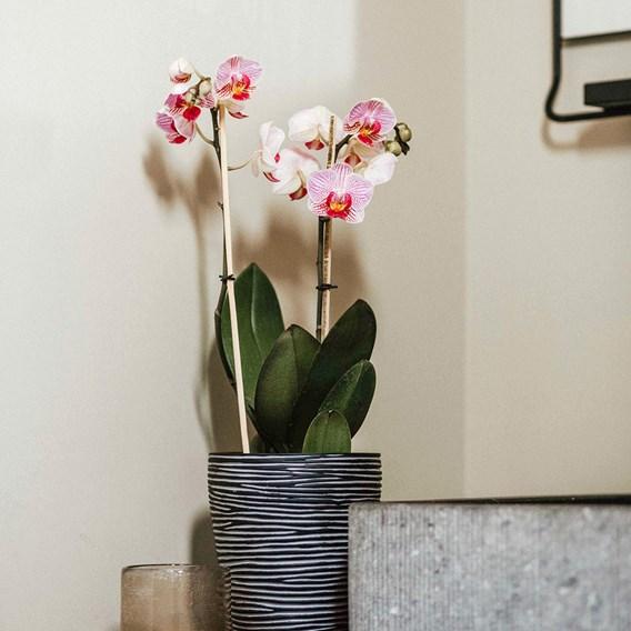 Orchid Pot Rib 14 x 17 black