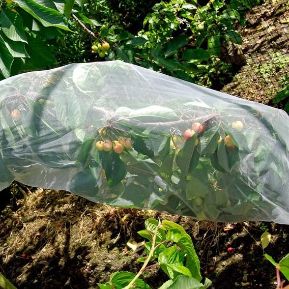 Fruit Tree Sleeves (Pack of 5)