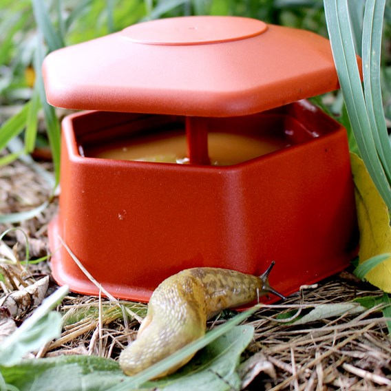 Portable Slug & Snail Trap