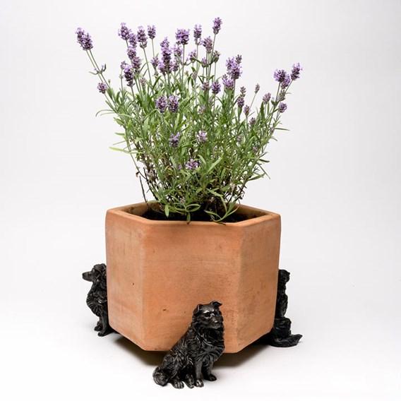 Border Collie Pot Feet