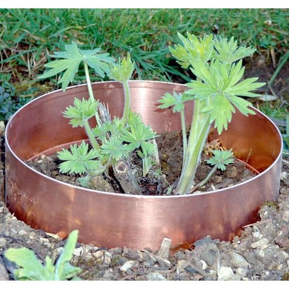 Copper Slug Rings