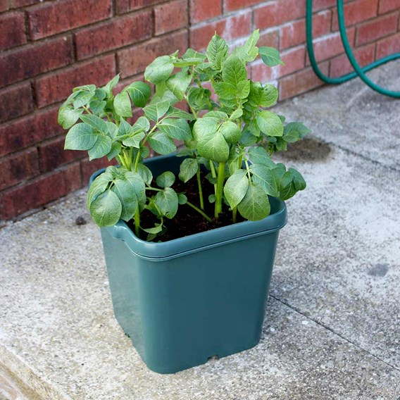 Pack Potato Pots (Pack of 3)