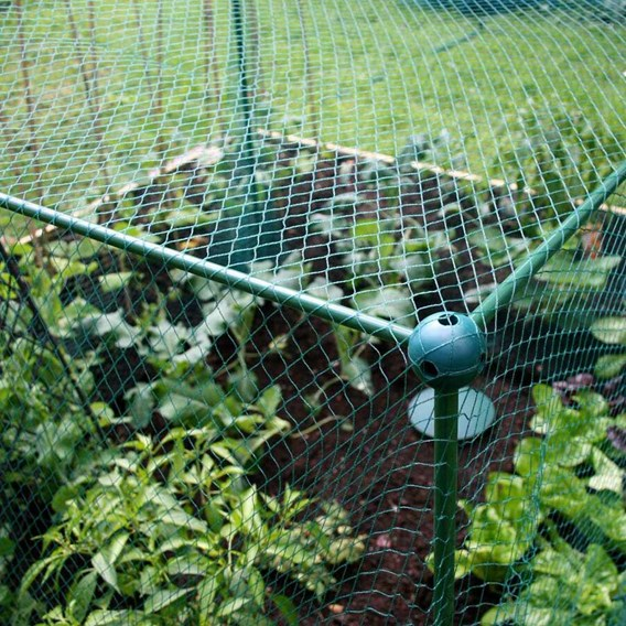 Butterfly Protection Cage