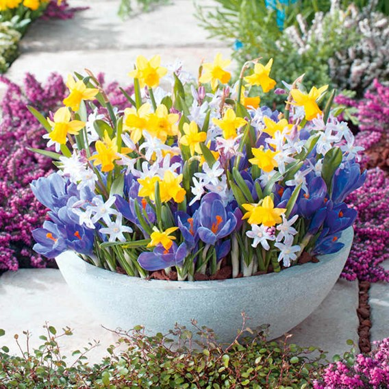 Pots of Colour Bulbs - Mix