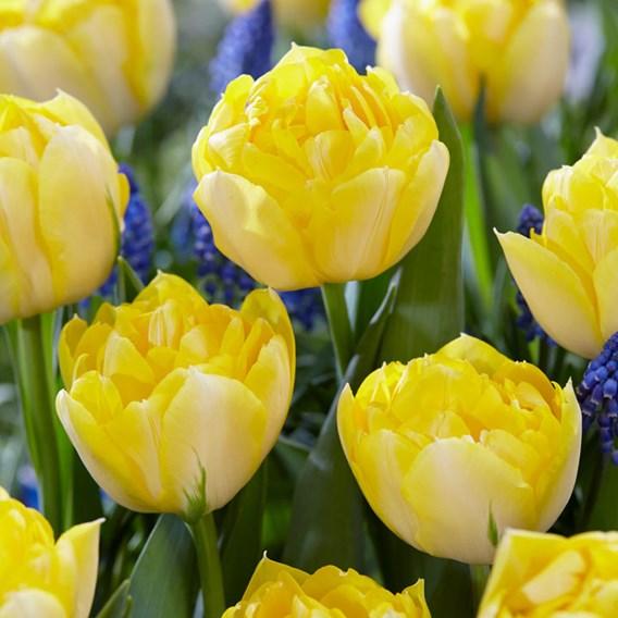 Tulip Secret Perfume (10)