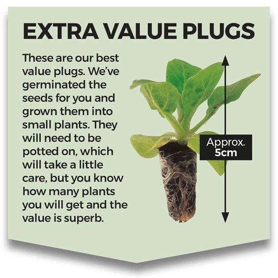Extra Value Plug Plants Collection