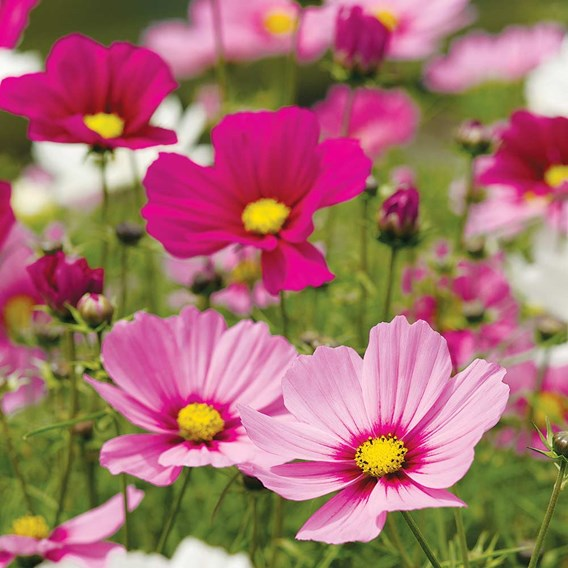 Suttons Set of 3 Ascot Planters including 3 Free Packets of Seed