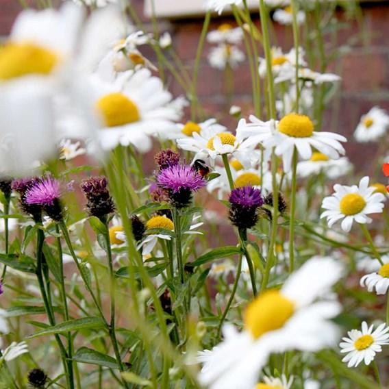 Pretty Perennials Mix