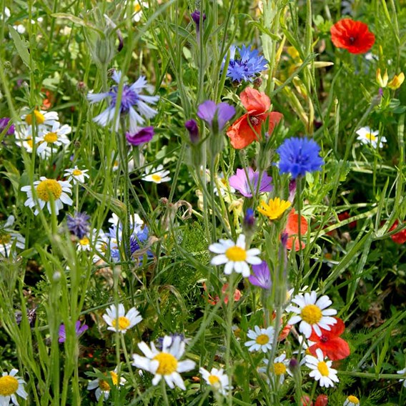Colourful Annuals Mix