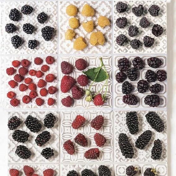 Blackberry Plant - Karaka Black