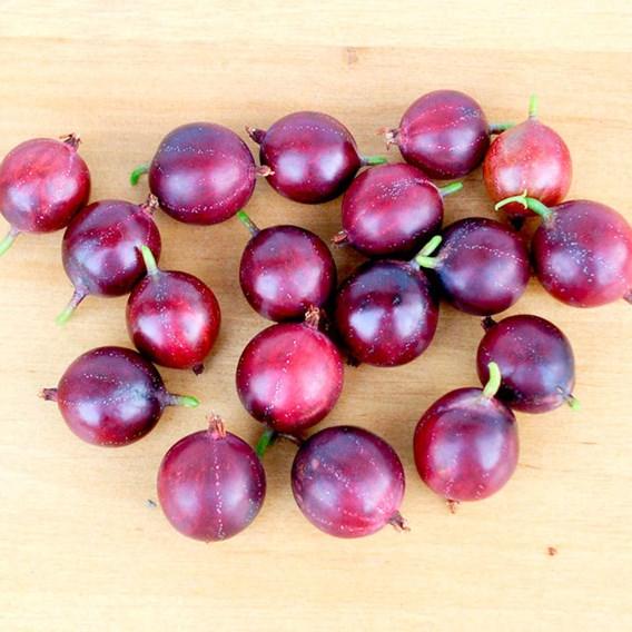 Gooseberries Captivator 1