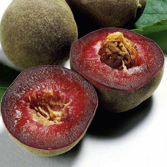 Peach Tree - Peche de Vigne