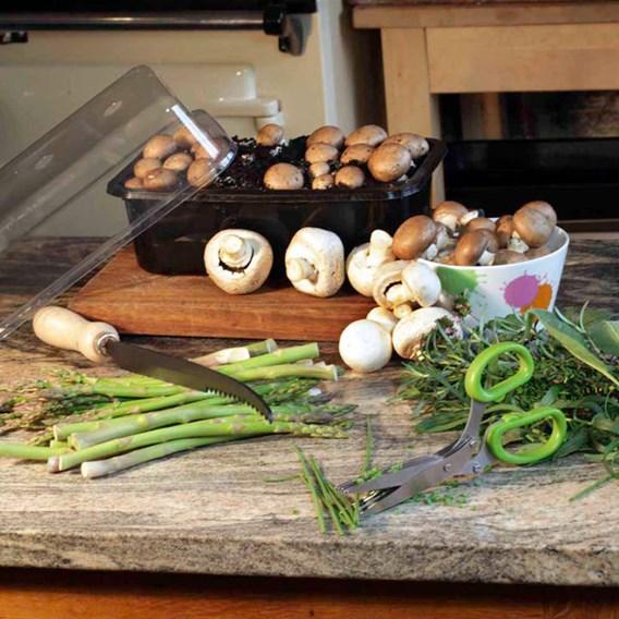 Mushrooms Mushroom Kit Chestnut (1)