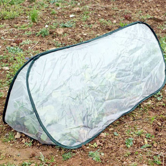 Pop Up Triangle Cloche - Polythene