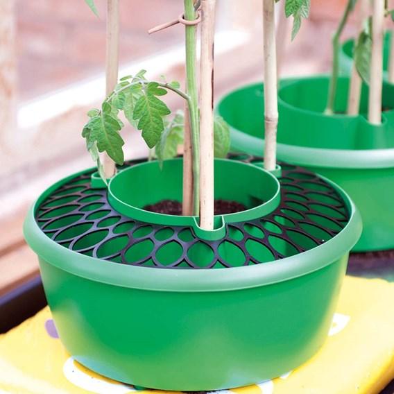 Plant Halos