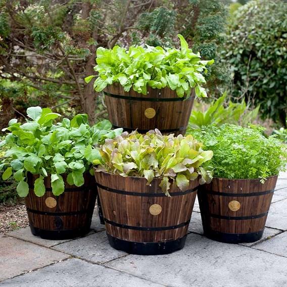 VegTrug Wooden Barrel Planter