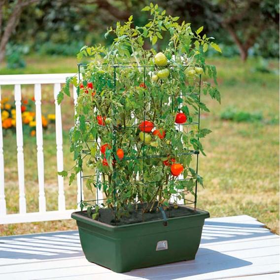 Mini Garden Growing Success Kit