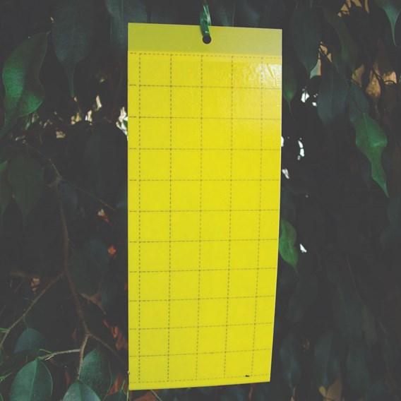 Yellow Sticky Traps