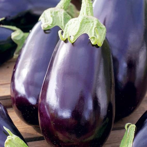 Aubergine Seeds - Black Beauty