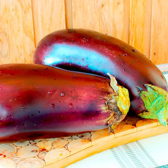 Aubergine Seeds - F1 Galine