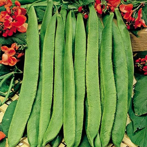 Bean Seeds - Grow a Whopper