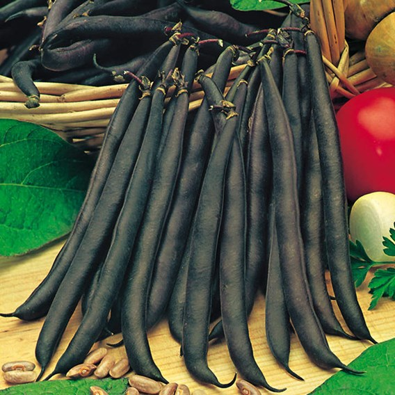 Bean (Dwarf French) Seeds - Purple Queen