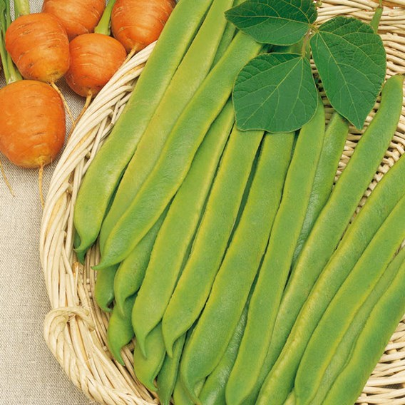 Runner Bean Seeds - Hestia (Dwarf Stringless)