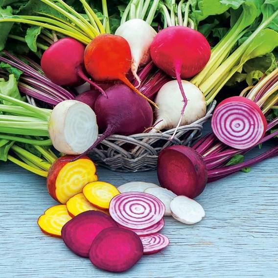 Beetroot Seeds - Rainbow Mix
