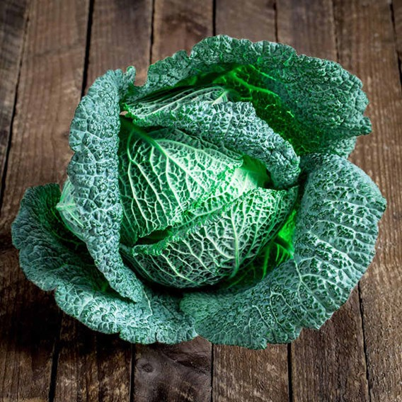 Cabbage Cordesa (22)