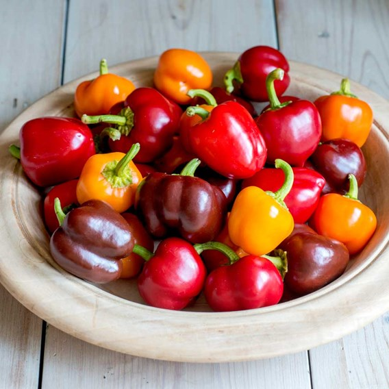 Pepper Sweet Seeds - Sweetonia Mix