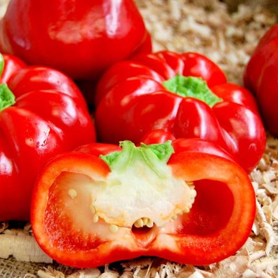 Pepper Grafted Gogorez (3)