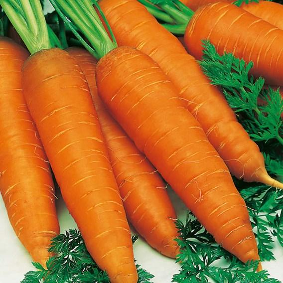 Carrot Seeds - Autumn King 2
