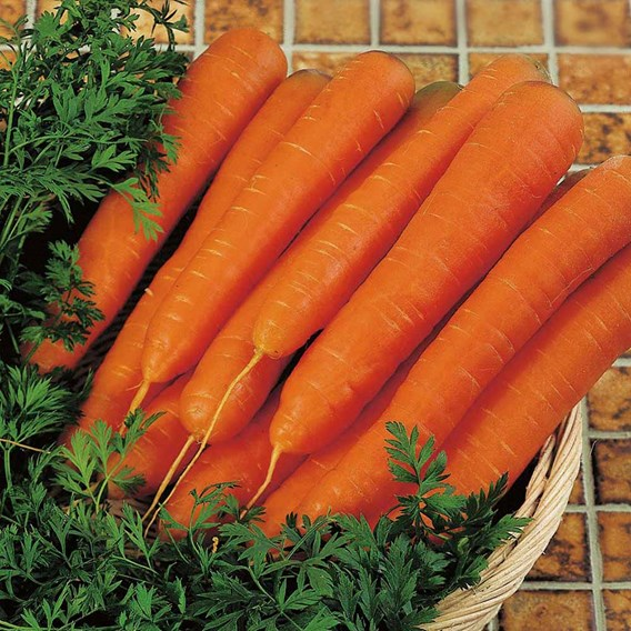 Carrot Seeds - F1 Resistafly