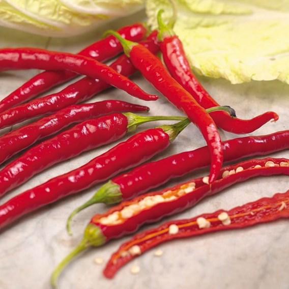 Pepper Chilli Seeds - De Cayenne