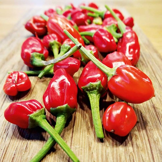 Pepper Chilli Seeds - F1 Apache