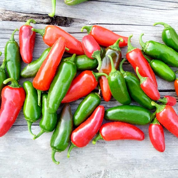 Pepper Chilli Seeds - Jalapeno
