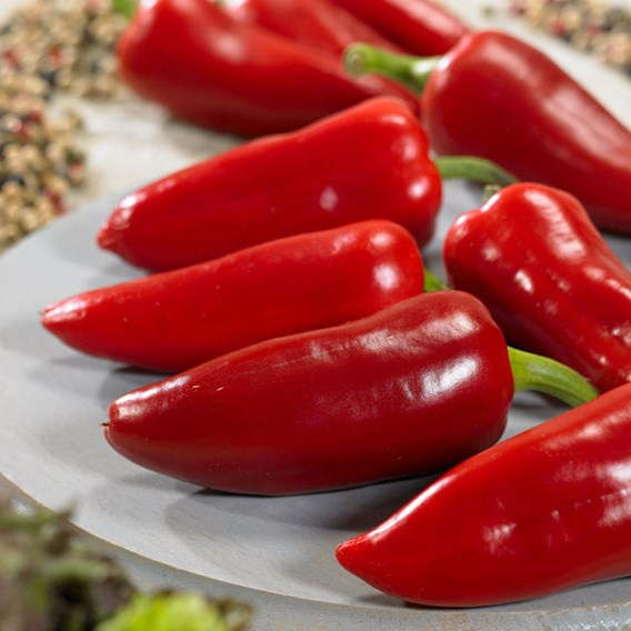 Pepper Spicy Jane (1) P10 (Ponky Pepper)