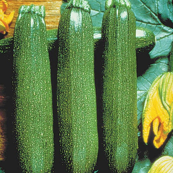 Courgette Twin Pack (6)