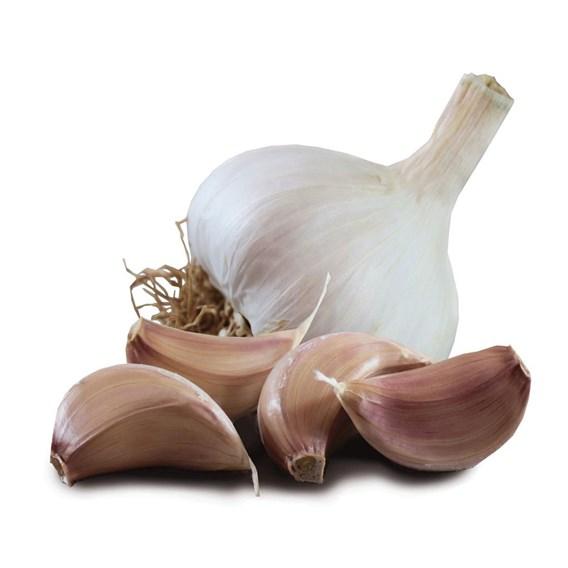 Garlic Bulbs Tuscany Wight