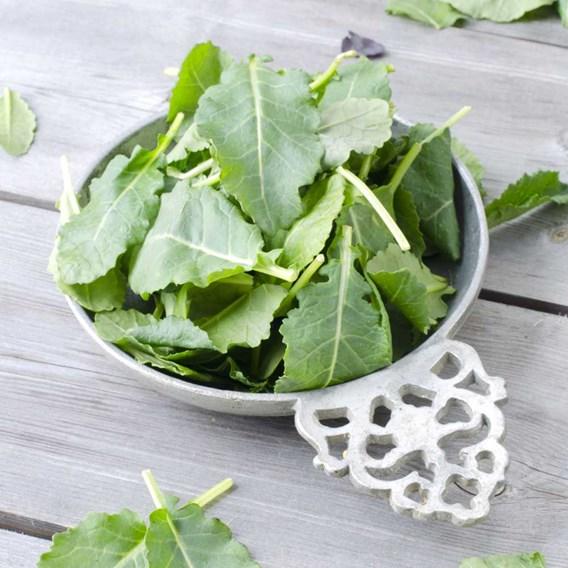Kale Shoots Seeds