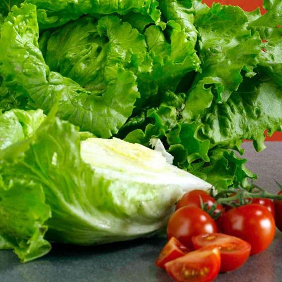 Lettuce Seeds - Webbs Wonderful