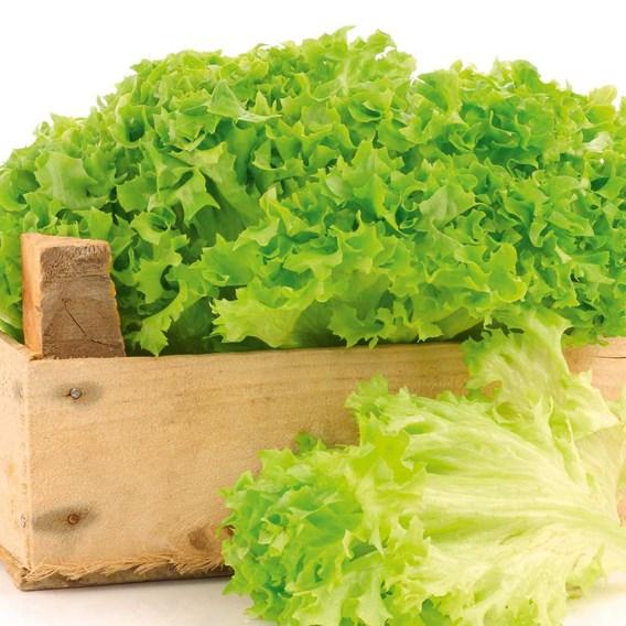 Lettuce Seeds - Lollo Bionda