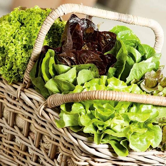Lettuce Seeds - Mix