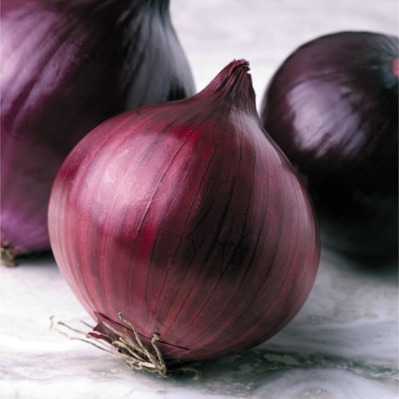 Onion Seeds - F1 Kamal