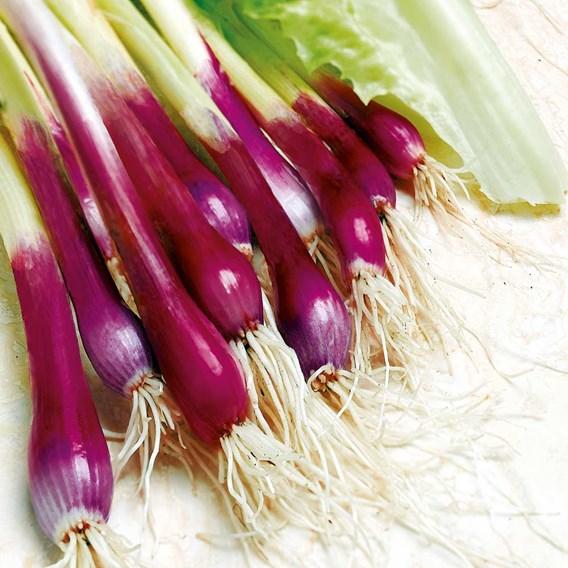 Onion (Salad) Seeds - Apache