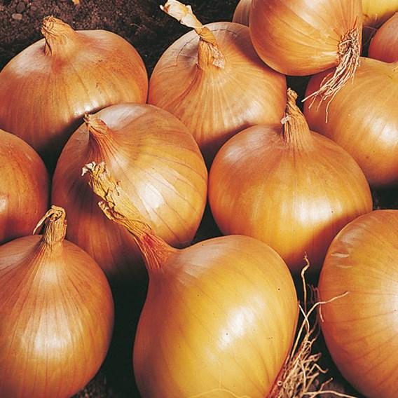 Onion Sets - Triple Pack