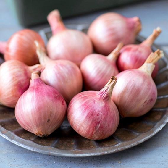 Onion Seeds - Isobel Rose