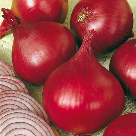 Onion Sets - Red Baron 250Gm