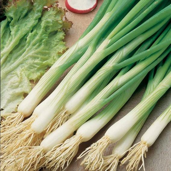 Onion (Salad) Seeds - White Lisbon - Winter Hardy Seeds