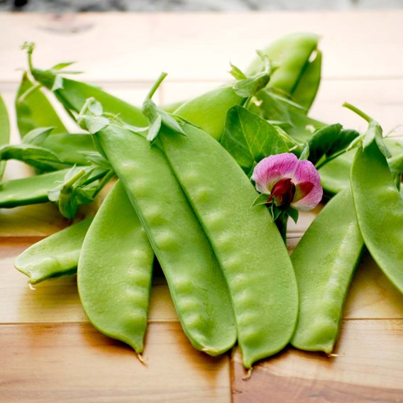 Snow Pea Seeds -  Green Beauty
